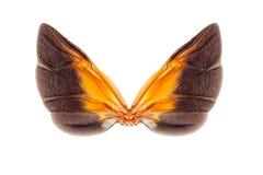 Vleugels van insect Royalty-vrije Stock Afbeeldingen