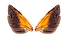 Vleugels van insect Stock Afbeelding