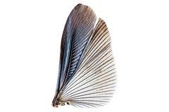 Vleugels van insect dat op een wit wordt geïsoleerd Stock Foto