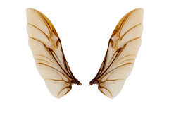 Vleugels van insect op witte achtergrond wordt geïsoleerd die Stock Foto