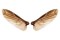 Vleugels van insect op witte achtergrond wordt geïsoleerd die Royalty-vrije Stock Fotografie