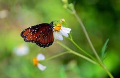 Vleugels van Kleurenvlinder Stock Foto
