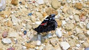 Vleugels van Uitputting stock afbeelding
