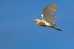 Vleugelslag royalty-vrije stock fotografie