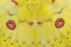 Vleugelspatroon van mot Royalty-vrije Stock Afbeelding