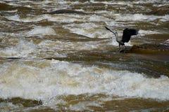 Vlieg die in kalme wateren vist royalty-vrije stock fotografie