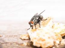 Vlieg die kruimel eet - hoog zeer belangrijk effect Stock Foto's