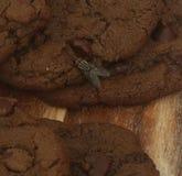 Vlieg op chocolade, chocoladeschilferkoekjes en broodplank royalty-vrije stock afbeelding
