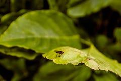 Vlieg op een groen blad Stock Afbeelding