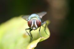 Vlieg op een groen blad royalty-vrije stock afbeeldingen
