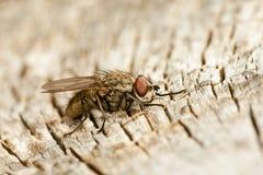 Vlieg op hout Stock Foto's