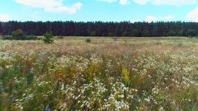 Vlieg over gebied met bloemen groene bos blauwe hemel stock footage