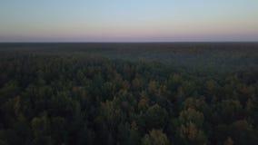 Vlieg over het diepe bos op gouden uur stock footage
