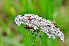 Vliegen en andere insecten Royalty-vrije Stock Foto