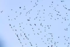 Vliegen op het Web stock afbeelding