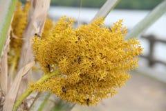 Vliegend bijenstuifmeel voor Palm Royalty-vrije Stock Afbeeldingen