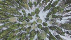 Vliegend boven bovenkanten van pijnbomen, sparren, sparren, bomen zonder bladeren stock footage