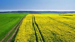 Vliegend boven groene en gele verkrachtingsgebieden in de lente, Polen stock video