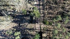 Vliegend boven ontbossing na orkaan, milieuvernietiging stock videobeelden