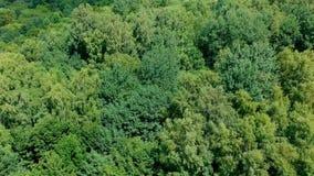 Vliegend boven vergankelijk bos tijdens winderige dag, luchtmening stock video