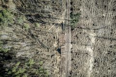Vliegend boven vreselijke ontbossing, registreren, milieuvernietiging, Polen royalty-vrije stock foto