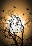 Vliegend kraaiensilhouet Royalty-vrije Stock Afbeeldingen