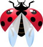 Vliegend onzelieveheersbeestje Stock Foto's