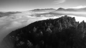 Vliegend over een berg met sparren, ontdekkend een overzees van wolken en andere pieken Mooi zwart-wit landschap met een latera stock footage
