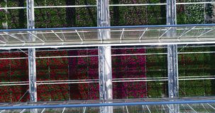 Vliegend over een grote serre met bloemen, een serre met een intrekbaar hierboven dak, een serremening van, het groeien stock videobeelden