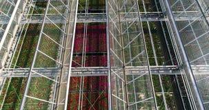 Vliegend over een grote serre met bloemen, een serre met een intrekbaar hierboven dak, een serremening van, het groeien stock video