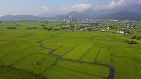 Vliegend over groene padievelden in Ilan Yilan, Taiwan, met een landweg die door de padievelden winden stock videobeelden