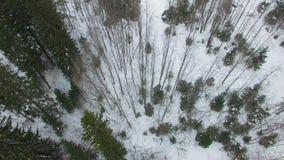 Vliegend over pijnbomen, sparren en bomen naar de bevroren antenne van de rivier hoogste mening stock footage