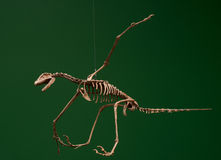 Vliegend skelet Royalty-vrije Stock Afbeelding