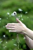 Vliegend stuifmeel royalty-vrije stock afbeelding