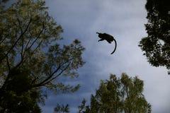 Vliegende aap Stock Foto
