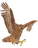 Vliegende adelaar Stock Foto's