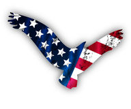 Vliegende Amerikaanse adelaar Stock Foto
