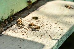 Vliegende bij in de bijenkorf Stock Foto's