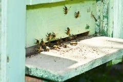 Vliegende bij in de bijenkorf Stock Afbeelding