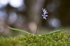 Vliegende bloem Stock Foto