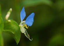 Vliegende bloemen stock afbeelding