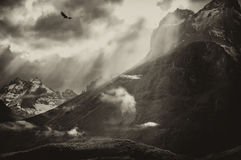 Vliegende condor over Torres Del Paine Mountains Stock Afbeeldingen