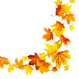 Vliegende de herfstbladeren Royalty-vrije Stock Fotografie