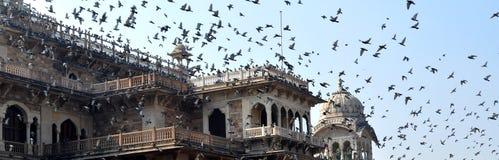 Vliegende duiven Royalty-vrije Stock Afbeeldingen
