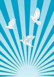 Vliegende duiven in de zon. Stock Afbeelding
