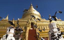 Vliegende duiven voor gouden stupa Stock Foto