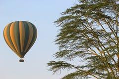 Vliegende groene en gele ballon dichtbij een acaciaboom Royalty-vrije Stock Foto