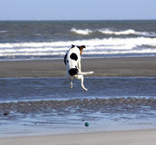 Vliegende hond Royalty-vrije Stock Fotografie