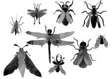 Vliegende insectenwaterverf royalty-vrije stock foto