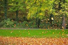 Vliegende kleurrijke bladeren Royalty-vrije Stock Afbeelding